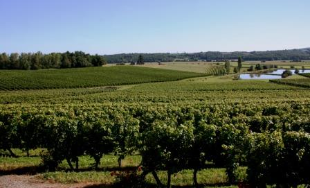 Madiran vineyards at Chateau Laffitte-Teston